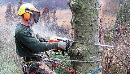 What Are The Benefits Of Removing Trees In Your Property?